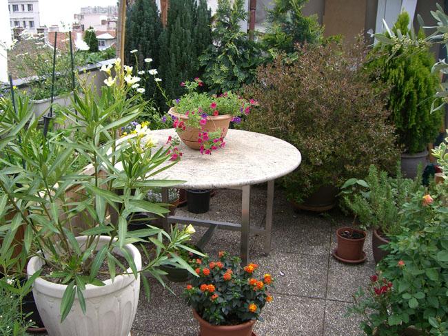 D co petit jardin floreria mulhouse 28 mulhouse petit - Mobilier jardin mulhouse ...